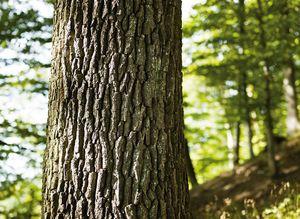 Nahaufnahme eines Baumstammes mit Holzrinde