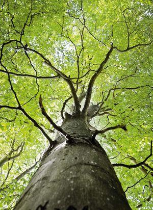 Alberi in cerchio con tronco da sotto
