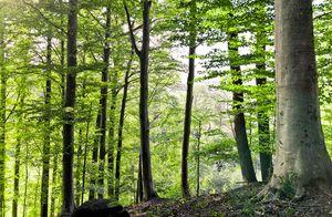 TEAM 7 Wald