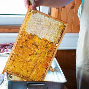 Bienenwaben bei der Honiggewinnung bei TEAM 7 Pram.