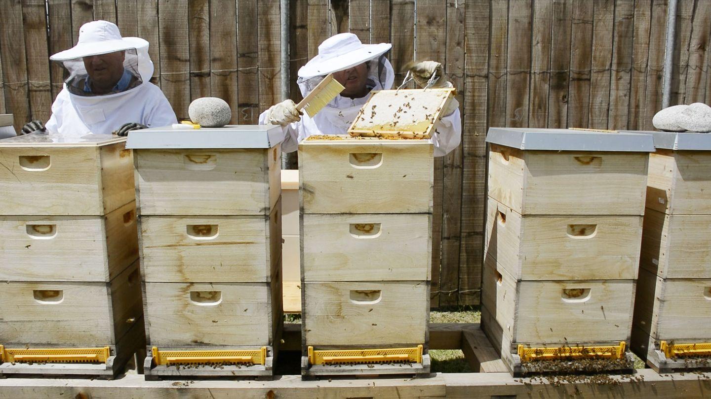TEAM 7 Imker bei Bienenstöcken.