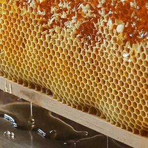 Nahaufnahme von Bienenwaben bei der Honiggewinnung bei TEAM 7 Pram.
